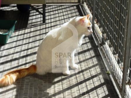 Bic, the cat at the apartment in Recoleta
