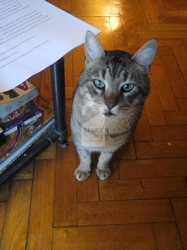 The cat Max
